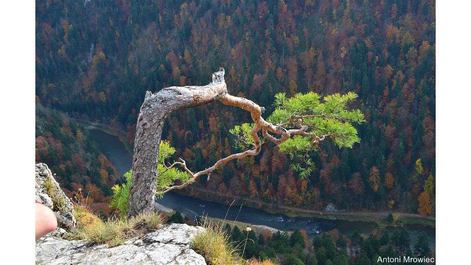 Góry Tokajsko-Slańskie, Szlak Beskidzki w Bieszczadach oraz Pieniny