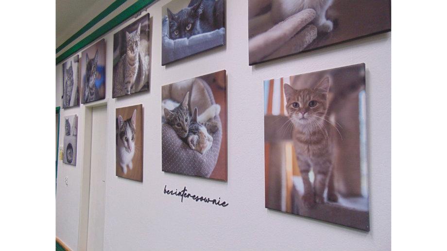 """""""Bezinteresownie""""- wystawa fotografii w Filii nr 4"""